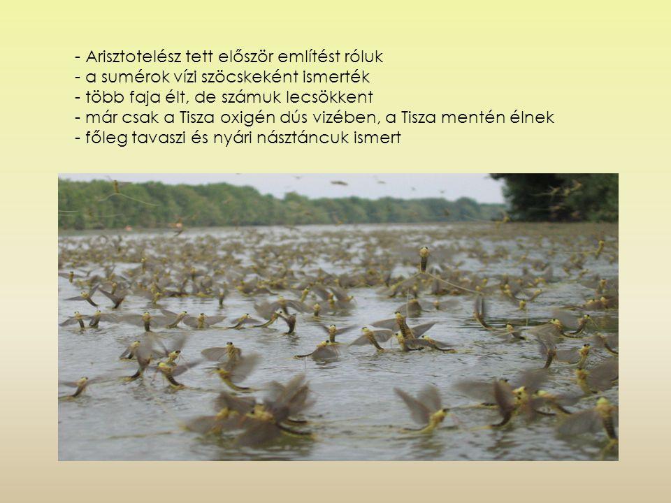 - Arisztotelész tett először említést róluk - a sumérok vízi szöcskeként ismerték - több faja élt, de számuk lecsökkent - már csak a Tisza oxigén dús