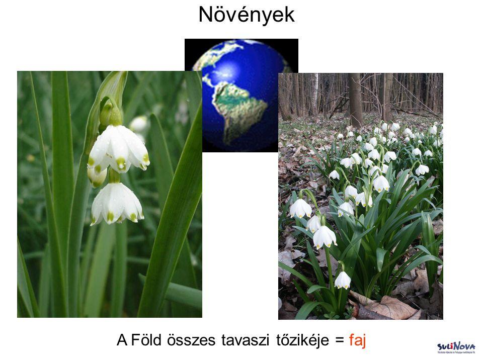 Növények A Föld összes tavaszi tőzikéje = faj