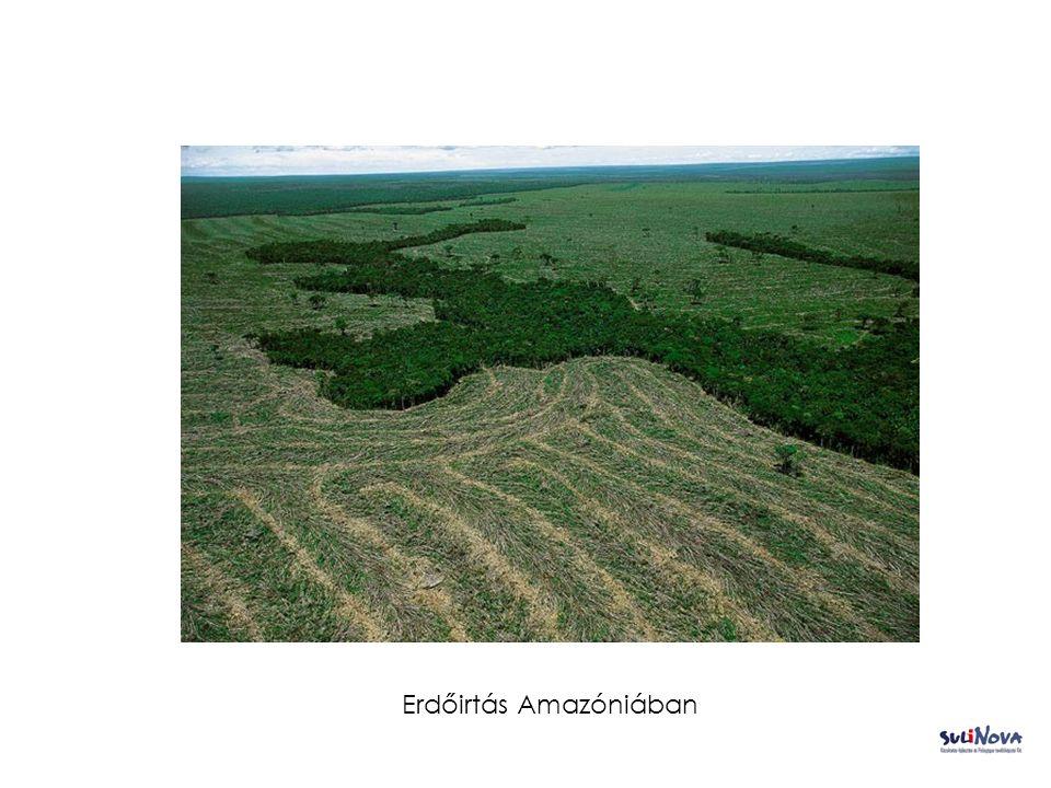Faúsztatás Amazóniában