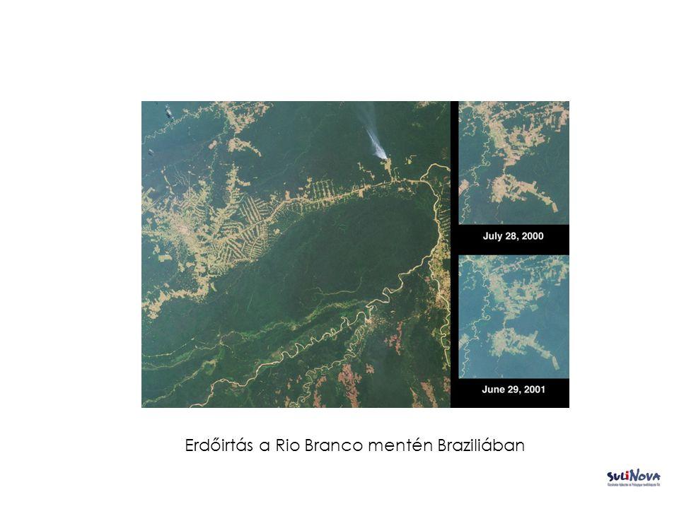 Erdőirtás a Rio Branco mentén Braziliában