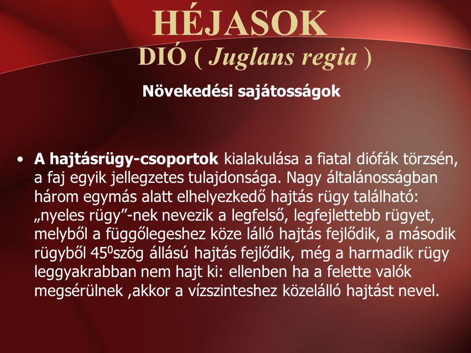 DIÓ ( Juglans regia ) Növekedési sajátosságok A hajtásrügy-csoportok kialakulása a fiatal diófák törzsén, a faj egyik jellegzetes tulajdonsága. Nagy á