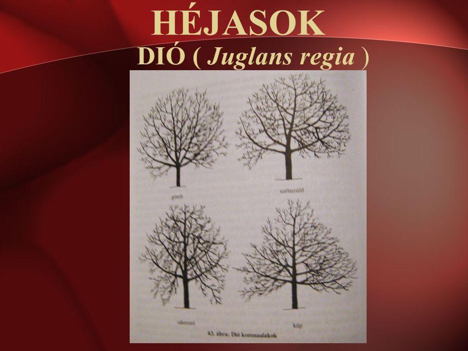 DIÓ ( Juglans regia ) HÉJASOK