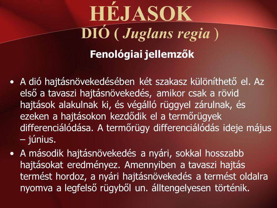 DIÓ ( Juglans regia ) Fenológiai jellemzők A dió hajtásnövekedésében két szakasz különíthető el. Az első a tavaszi hajtásnövekedés, amikor csak a rövi