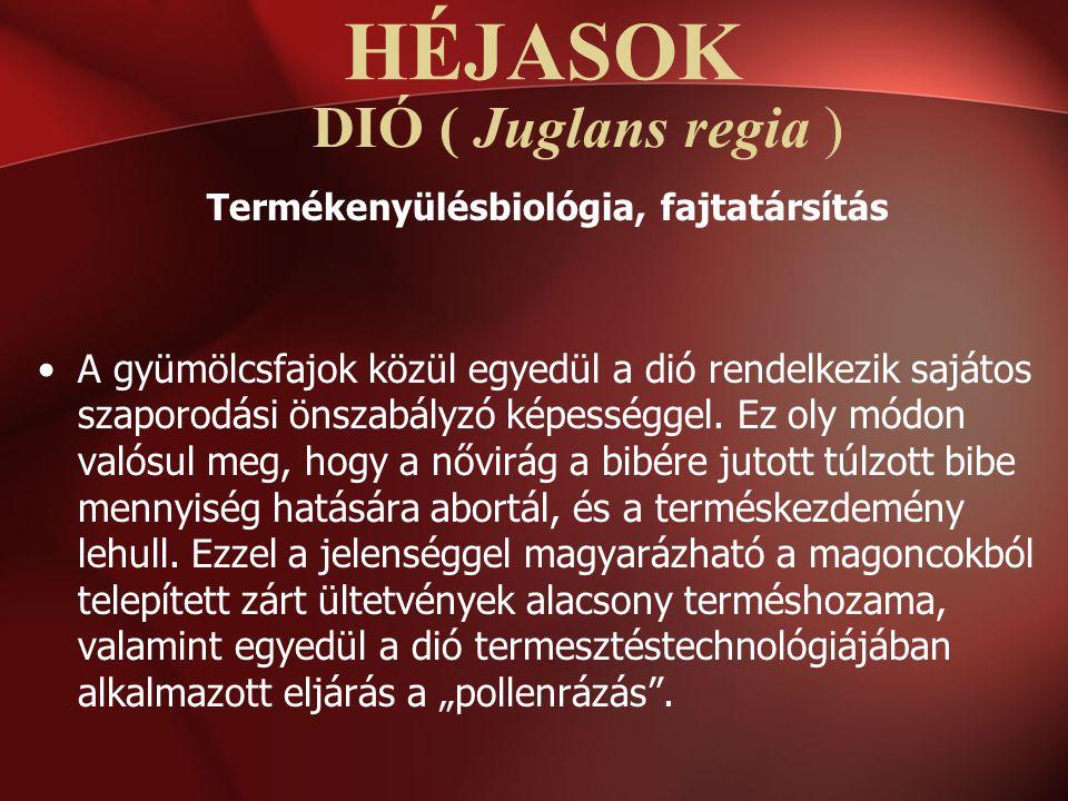 DIÓ ( Juglans regia ) Termékenyülésbiológia, fajtatársítás A gyümölcsfajok közül egyedül a dió rendelkezik sajátos szaporodási önszabályzó képességgel