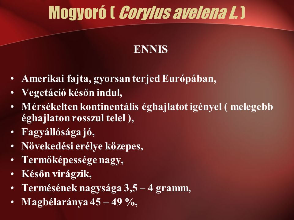 Mogyoró ( Corylus avelena L. ) ENNIS Amerikai fajta, gyorsan terjed Európában, Vegetáció későn indul, Mérsékelten kontinentális éghajlatot igényel ( m