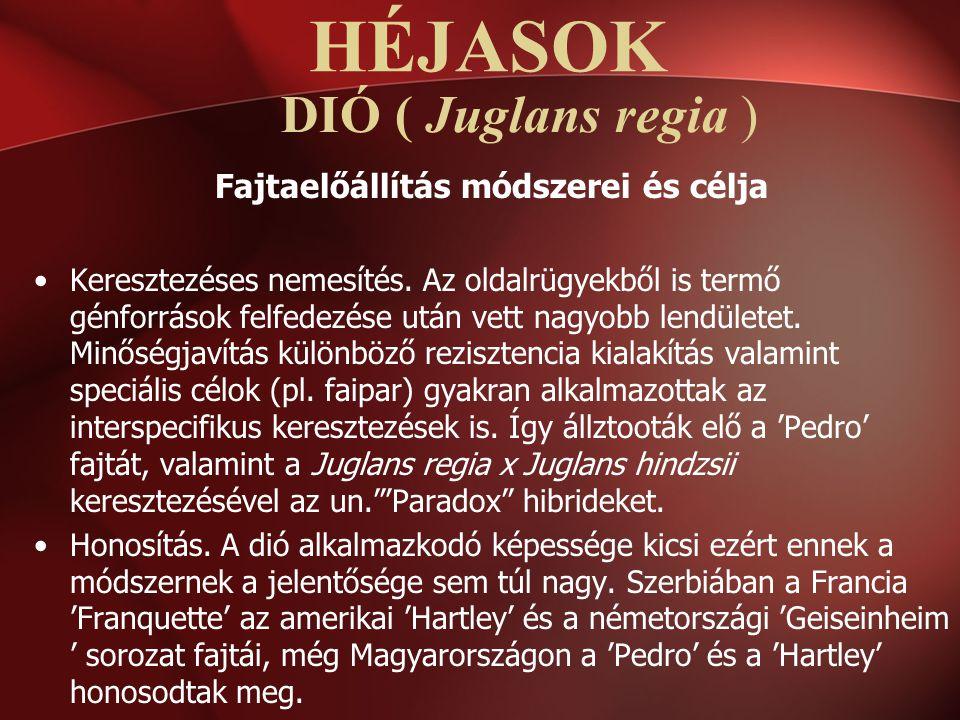 DIÓ ( Juglans regia ) Fajtaelőállítás módszerei és célja Keresztezéses nemesítés. Az oldalrügyekből is termő génforrások felfedezése után vett nagyobb