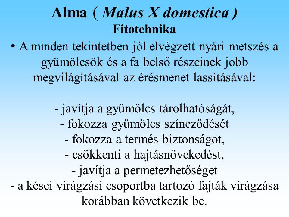 Alma ( Malus X domestica ) Fitotehnika A minden tekintetben jól elvégzett nyári metszés a gyümölcsök és a fa belső részeinek jobb megvilágításával az érésmenet lassításával: - javítja a gyümölcs tárolhatóságát, - fokozza gyümölcs színeződését - fokozza a termés biztonságot, - csökkenti a hajtásnövekedést, - javítja a permetezhetőséget - a kései virágzási csoportba tartozó fajták virágzása korábban következik be.
