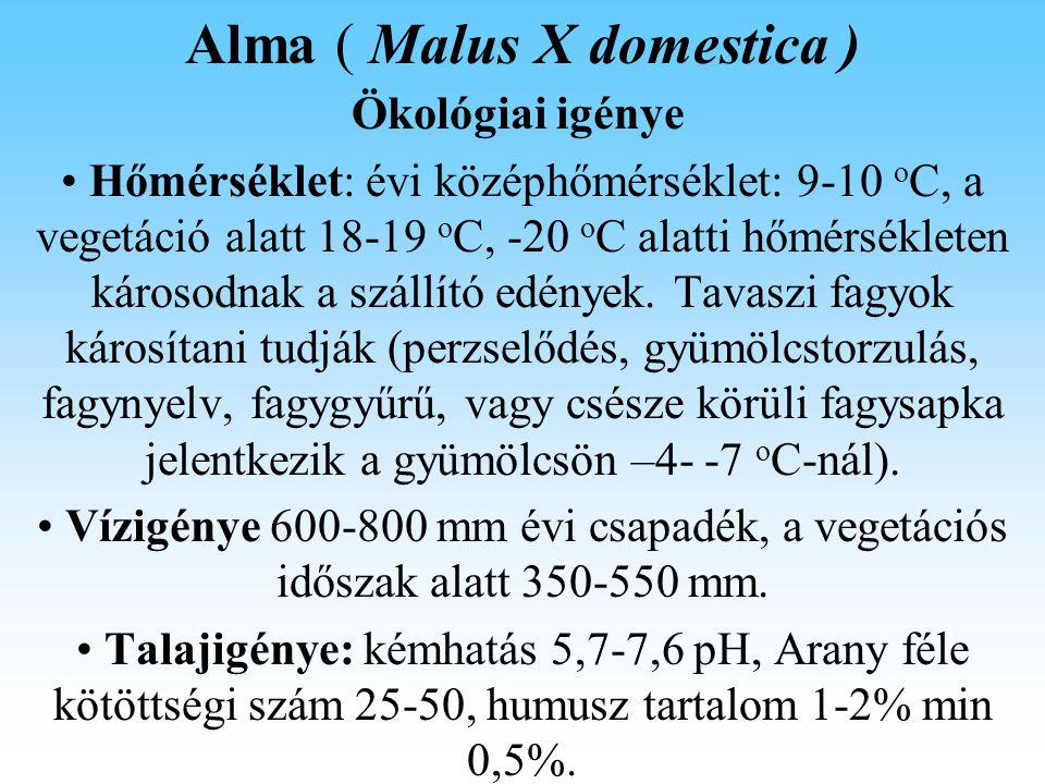 Alma ( Malus X domestica ) Fitotehnika Harmadik év és a további években: A meredek és árnyékoló vesszőket el kell távolítani a koronából.