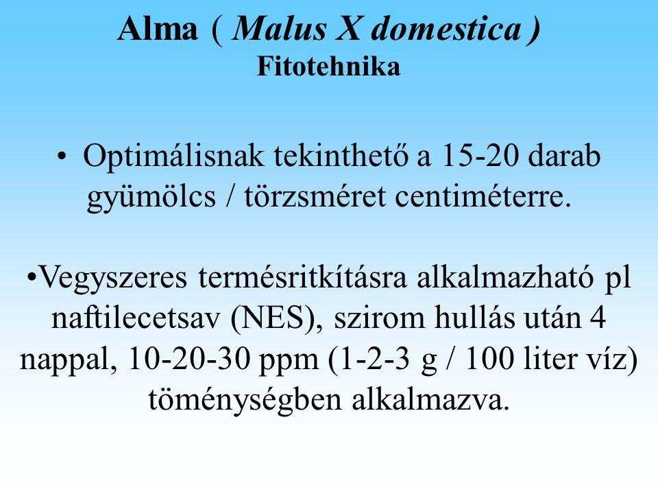 Alma ( Malus X domestica ) Fitotehnika Optimálisnak tekinthető a 15-20 darab gyümölcs / törzsméret centiméterre.