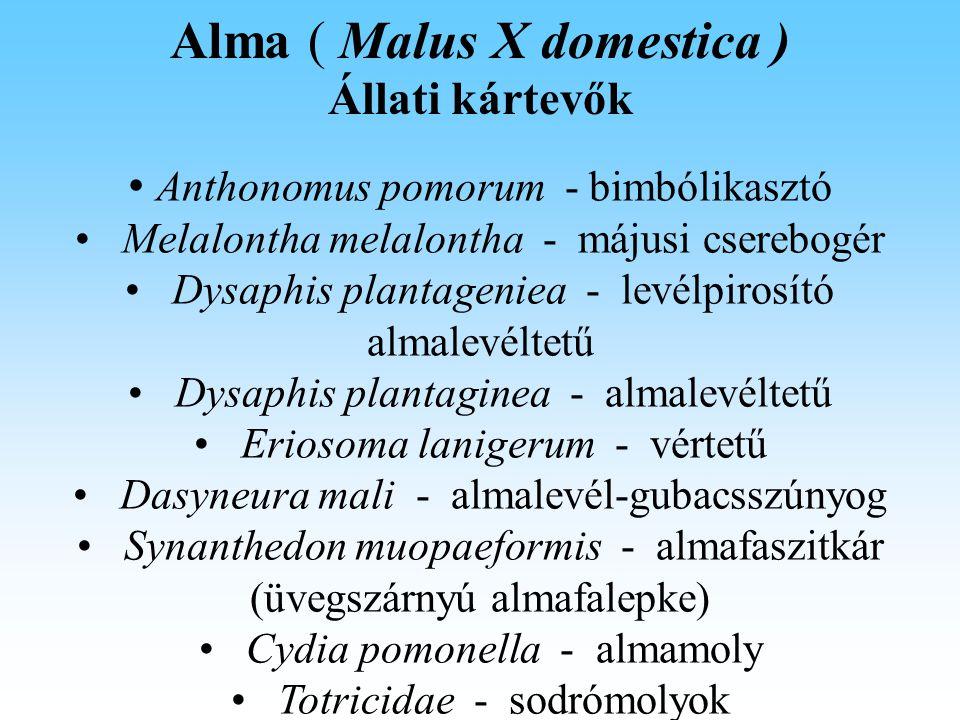 Alma ( Malus X domestica ) Állati kártevők Anthonomus pomorum - bimbólikasztó Melalontha melalontha - májusi cserebogér Dysaphis plantageniea - levélpirosító almalevéltetű Dysaphis plantaginea - almalevéltetű Eriosoma lanigerum - vértetű Dasyneura mali - almalevél-gubacsszúnyog Synanthedon muopaeformis - almafaszitkár (üvegszárnyú almafalepke) Cydia pomonella - almamoly Totricidae - sodrómolyok
