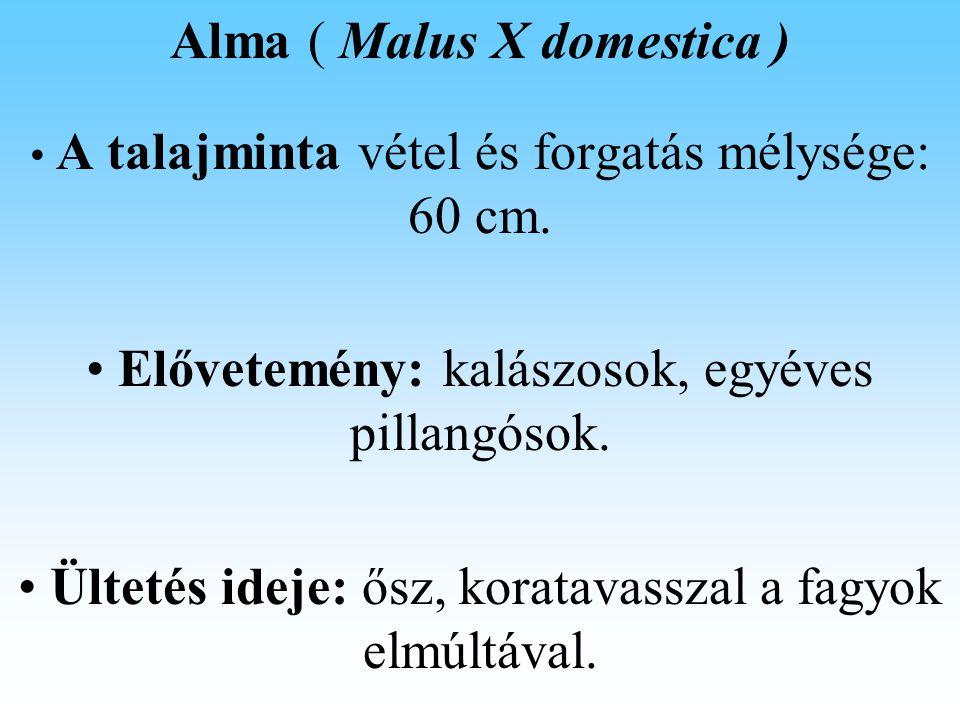Alma ( Malus X domestica ) Talajerő gazdálkodás Öntözés: A vegetációs időszakban 350 – 550 mm csapadékot igényel, (vidékünkön öntözésre szorul), a napi víz fogyasztása 1 – 5mm, szélsőséges esetben 6,5 – 7mm.