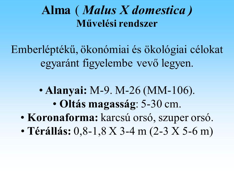 Alma ( Malus X domestica ) Fitotehnika Gyümölcsritkítás: a túlzott berakodás csökkenése a fán maradó gyümölcsök növekedését, valamint a következő évi jó virágzás megteremtését eredményezi.