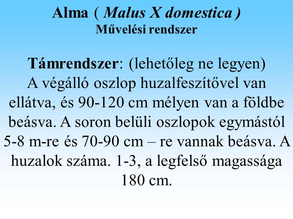 Alma ( Malus X domestica ) Fitotehnika A ritkítás sorrendje: - a csokrok megszüntetése, - minden második virágzatot, - apró, deformált, károsodott gyümölcs, - a fák stabilitása érdekében a vesszők végein levő gyümölcsök kerüljenek eltávolításra.