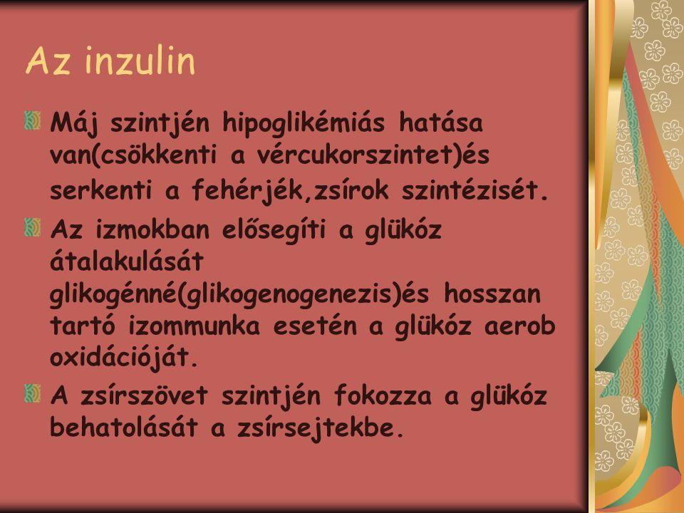 Az inzulin Máj szintjén hipoglikémiás hatása van(csökkenti a vércukorszintet)és serkenti a fehérjék,zsírok szintézisét. Az izmokban elősegíti a glükóz
