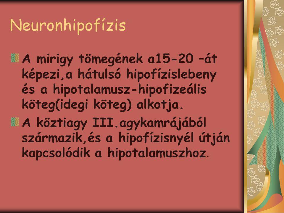 Neuronhipofízis A mirigy tömegének a15-20 –át képezi,a hátulsó hipofízislebeny és a hipotalamusz-hipofizeális köteg(idegi köteg) alkotja. A köztiagy I