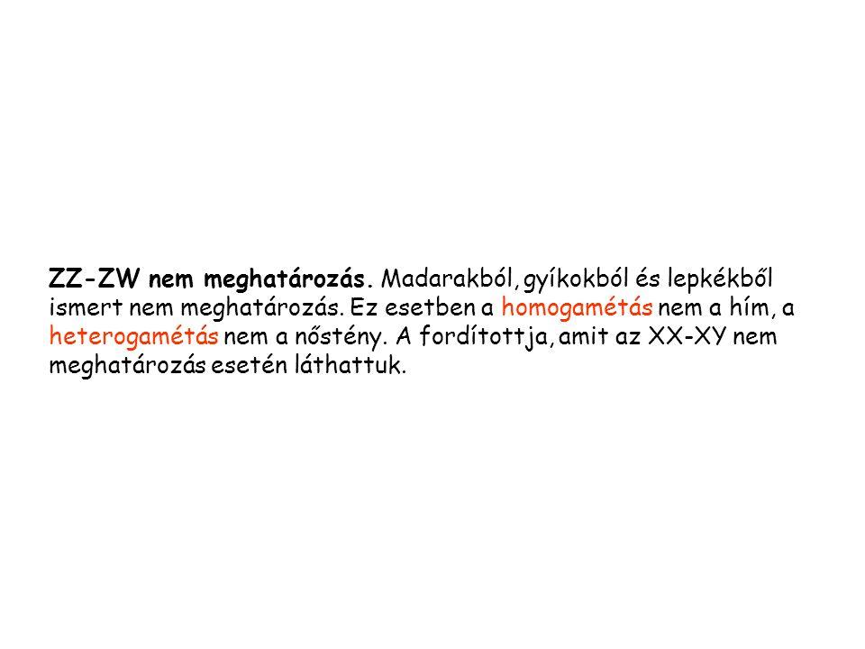 ZZ-ZW nem meghatározás.Madarakból, gyíkokból és lepkékből ismert nem meghatározás.