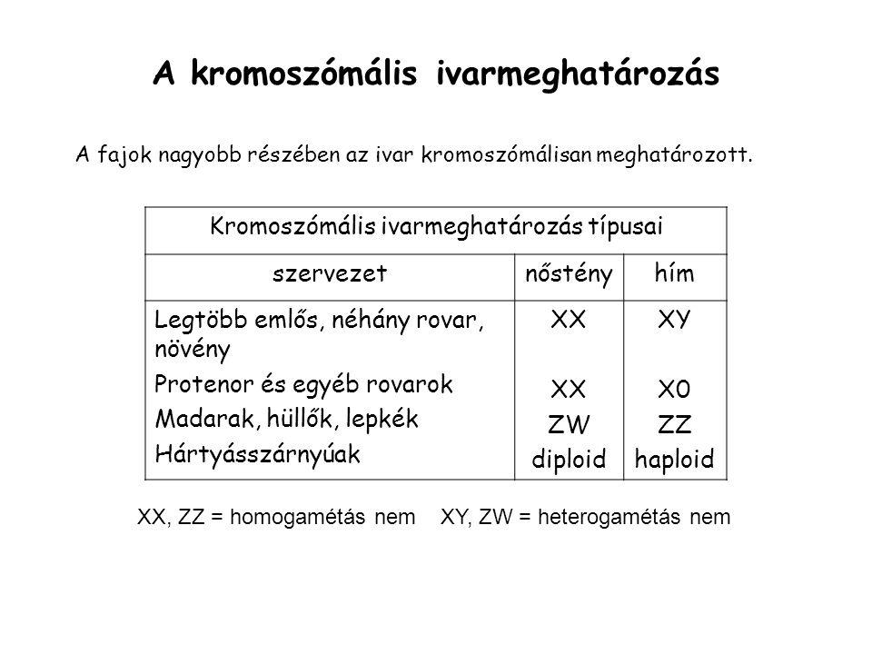 A kromoszómális ivarmeghatározás A fajok nagyobb részében az ivar kromoszómálisan meghatározott.