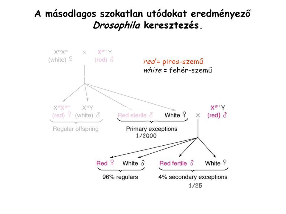 A másodlagos szokatlan utódokat eredményező Drosophila keresztezés.