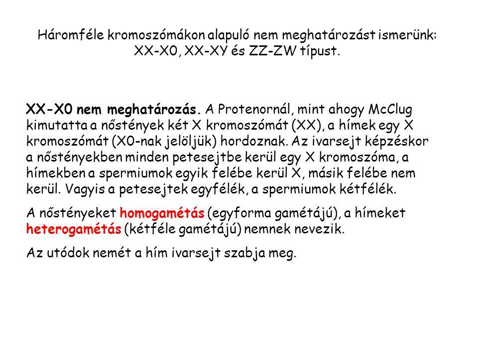 Háromféle kromoszómákon alapuló nem meghatározást ismerünk: XX-X0, XX-XY és ZZ-ZW típust.