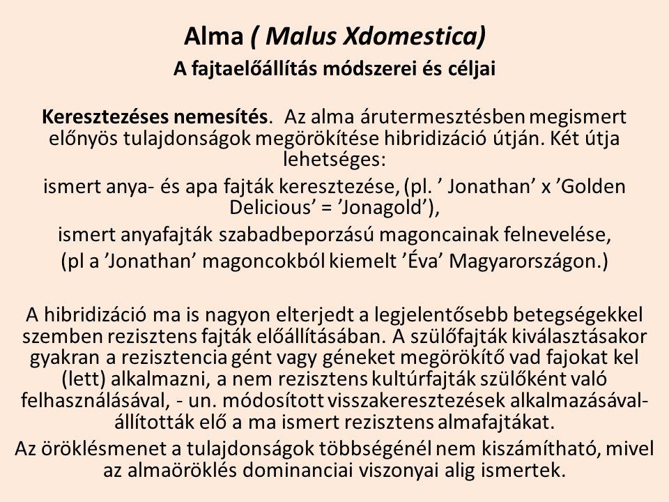 Alma ( Malus Xdomestica) A fajtaelőállítás módszerei és céljai Keresztezéses nemesítés. Az alma árutermesztésben megismert előnyös tulajdonságok megör