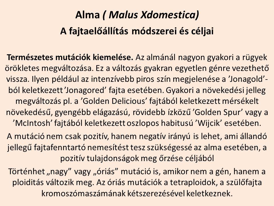 Alma ( Malus Xdomestica) A fajtaelőállítás módszerei és céljai Természetes mutációk kiemelése. Az almánál nagyon gyakori a rügyek örökletes megváltozá