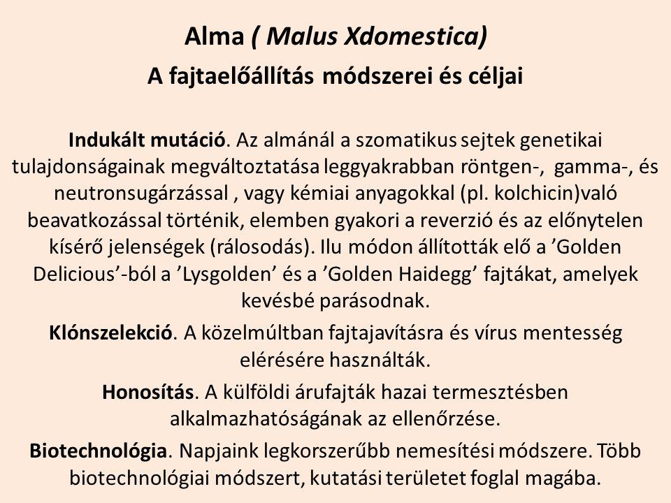 Alma ( Malus Xdomestica) A fajtaelőállítás módszerei és céljai Indukált mutáció. Az almánál a szomatikus sejtek genetikai tulajdonságainak megváltozta