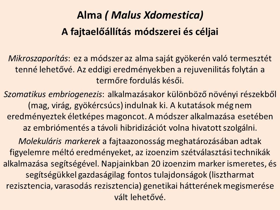 Alma ( Malus Xdomestica) A fajtaelőállítás módszerei és céljai Mikroszaporítás: ez a módszer az alma saját gyökerén való termesztét tenné lehetővé. Az