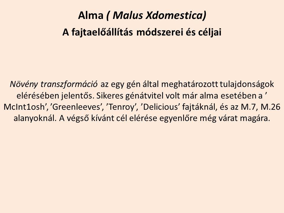 Alma ( Malus Xdomestica) A fajtaelőállítás módszerei és céljai Növény transzformáció az egy gén által meghatározott tulajdonságok elérésében jelentős.