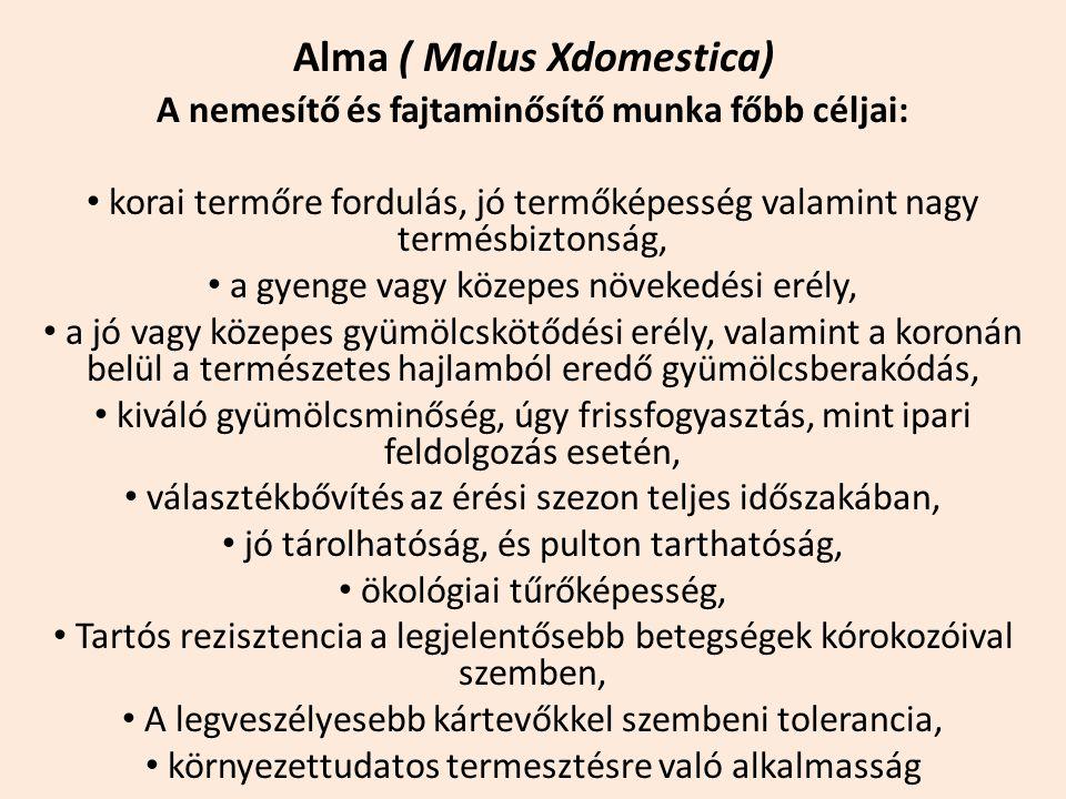 Alma ( Malus Xdomestica) A nemesítő és fajtaminősítő munka főbb céljai: korai termőre fordulás, jó termőképesség valamint nagy termésbiztonság, a gyen