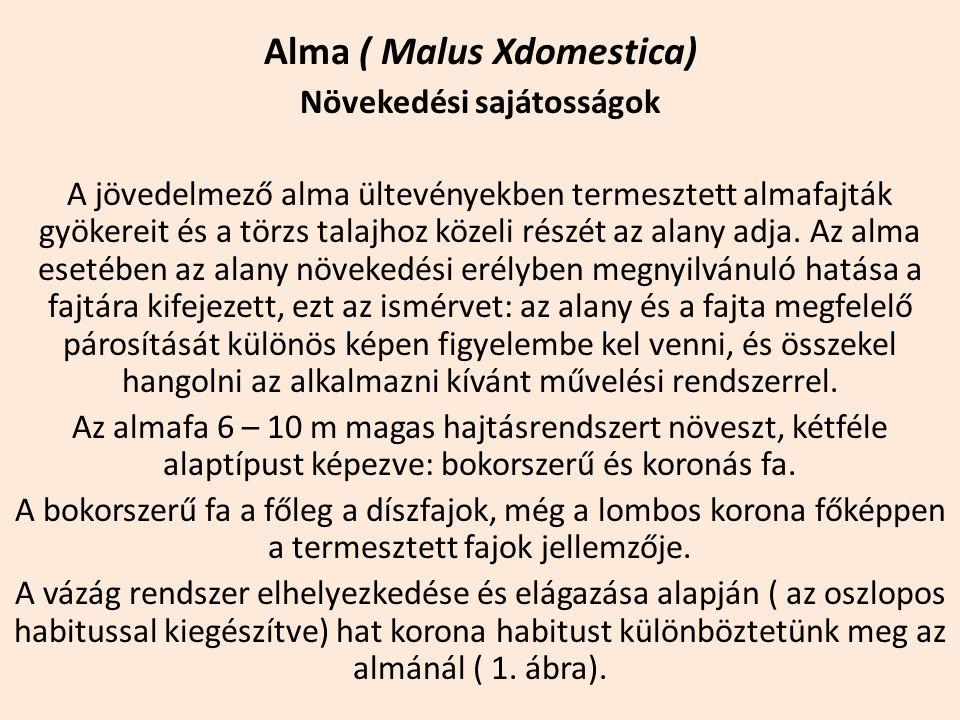 Alma ( Malus Xdomestica) Növekedési sajátosságok A jövedelmező alma ültevényekben termesztett almafajták gyökereit és a törzs talajhoz közeli részét a