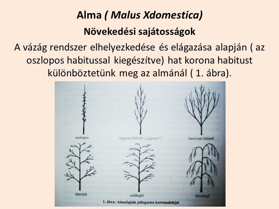 Alma ( Malus Xdomestica) Növekedési sajátosságok A vázág rendszer elhelyezkedése és elágazása alapján ( az oszlopos habitussal kiegészítve) hat korona