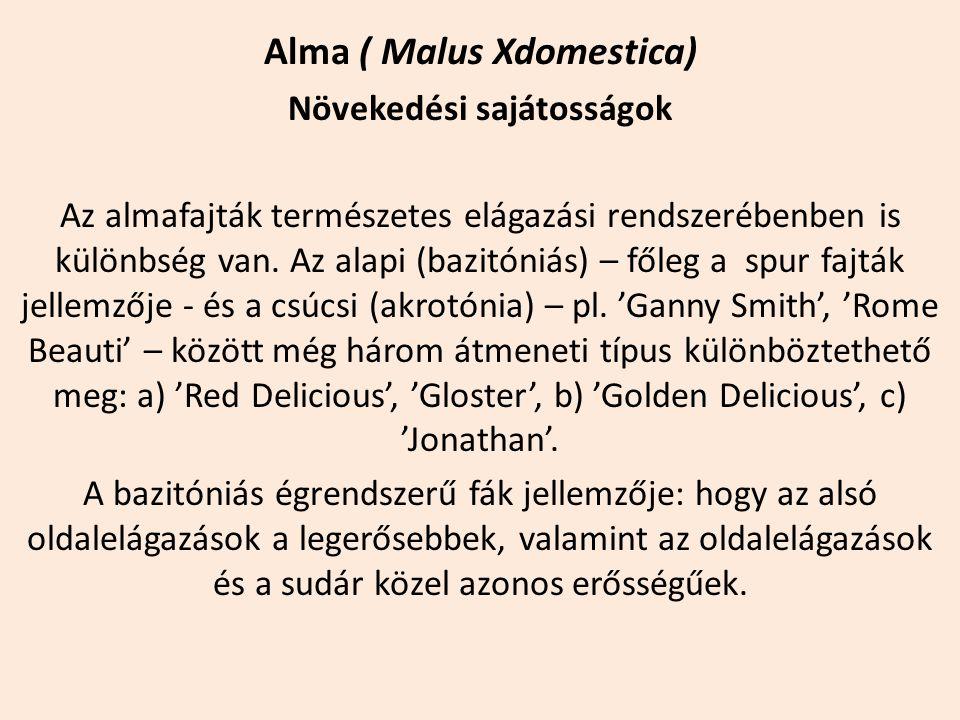 Alma ( Malus Xdomestica) Növekedési sajátosságok Az almafajták természetes elágazási rendszerébenben is különbség van. Az alapi (bazitóniás) – főleg a