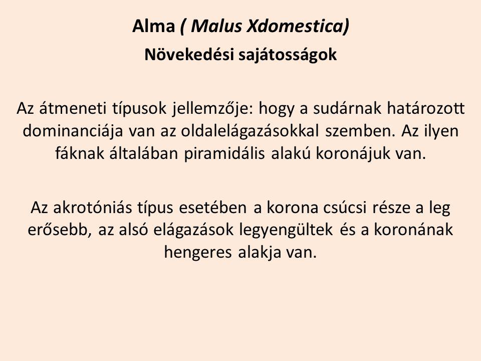 Alma ( Malus Xdomestica) Növekedési sajátosságok Az átmeneti típusok jellemzője: hogy a sudárnak határozott dominanciája van az oldalelágazásokkal sze