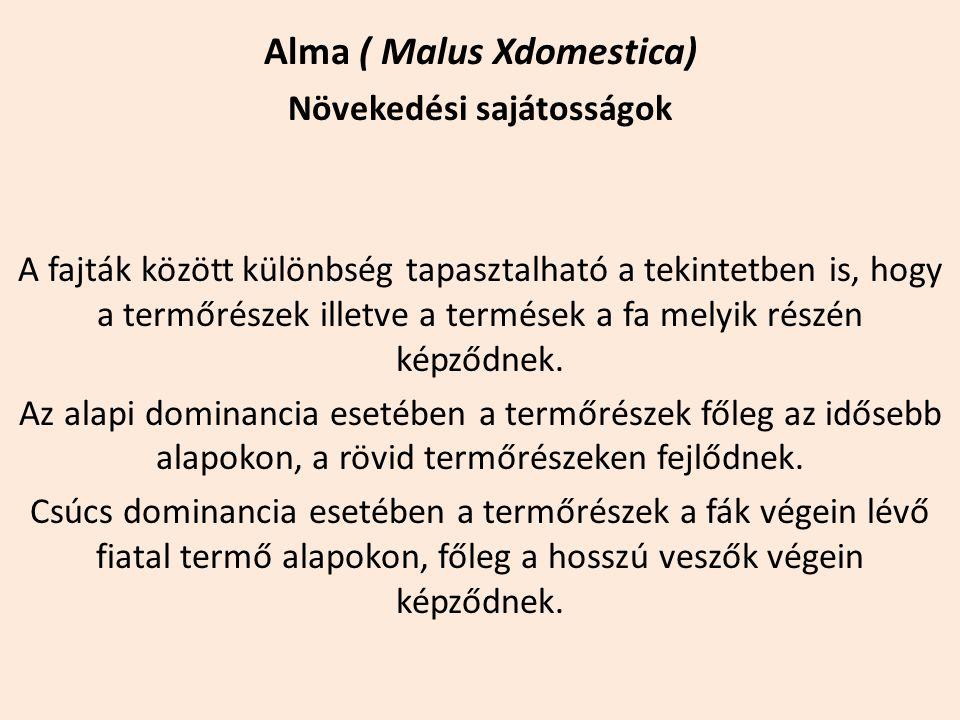 Alma ( Malus Xdomestica) Növekedési sajátosságok A fajták között különbség tapasztalható a tekintetben is, hogy a termőrészek illetve a termések a fa