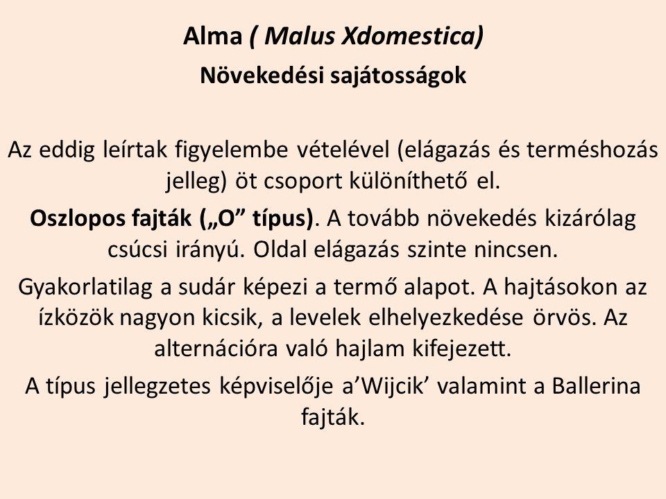 Alma ( Malus Xdomestica) Növekedési sajátosságok Az eddig leírtak figyelembe vételével (elágazás és terméshozás jelleg) öt csoport különíthető el. Osz