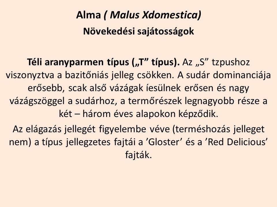 """Alma ( Malus Xdomestica) Növekedési sajátosságok Téli aranyparmen típus (""""T"""" típus). Az """"S"""" tzpushoz viszonyztva a bazitőniás jelleg csökken. A sudár"""