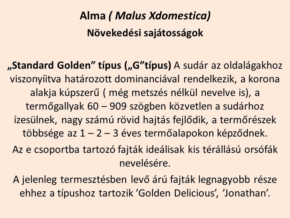"""Alma ( Malus Xdomestica) Növekedési sajátosságok """"Standard Golden"""" típus (""""G""""típus) A sudár az oldalágakhoz viszonyíitva határozott dominanciával rend"""