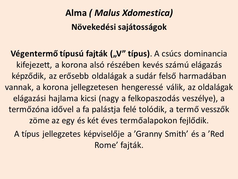 """Alma ( Malus Xdomestica) Növekedési sajátosságok Végentermő típusú fajták (""""V"""" típus). A csúcs dominancia kifejezett, a korona alsó részében kevés szá"""