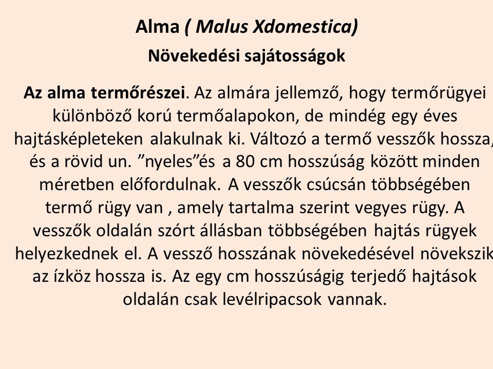 Alma ( Malus Xdomestica) Növekedési sajátosságok Az alma termőrészei. Az almára jellemző, hogy termőrügyei különböző korú termőalapokon, de mindég egy