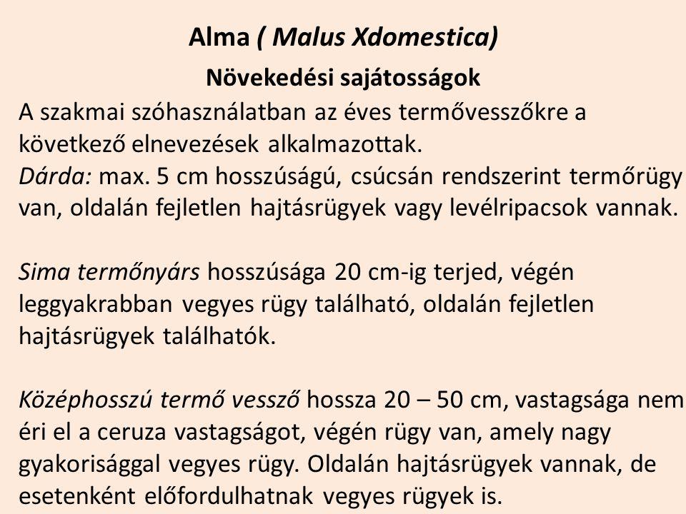 Alma ( Malus Xdomestica) Növekedési sajátosságok A szakmai szóhasználatban az éves termővesszőkre a következő elnevezések alkalmazottak. Dárda: max. 5