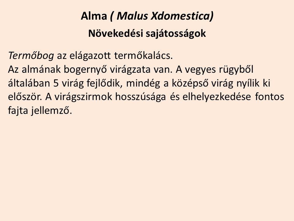 Alma ( Malus Xdomestica) Növekedési sajátosságok Termőbog az elágazott termőkalács. Az almának bogernyő virágzata van. A vegyes rügyből általában 5 vi