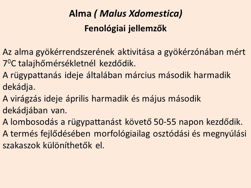 Alma ( Malus Xdomestica) Fenológiai jellemzők Az alma gyökérrendszerének aktivitása a gyökérzónában mért 7 0 C talajhőmérsékletnél kezdődik. A rügypat