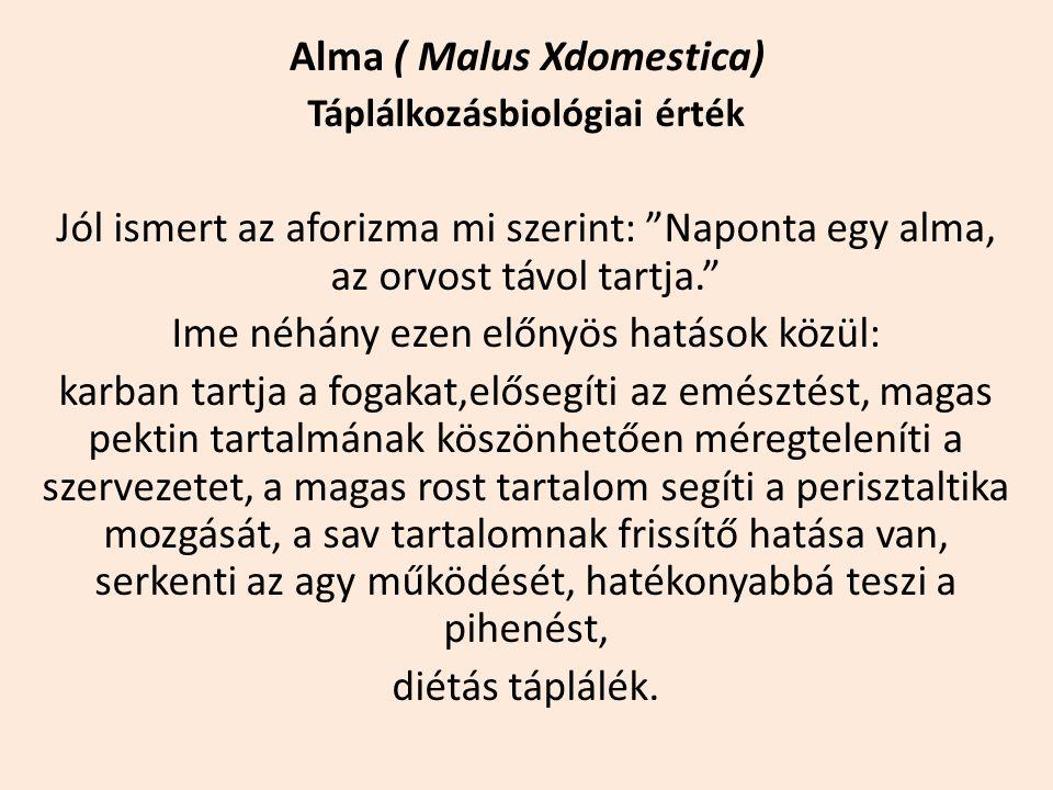 """Alma ( Malus Xdomestica) Táplálkozásbiológiai érték Jól ismert az aforizma mi szerint: """"Naponta egy alma, az orvost távol tartja."""" Ime néhány ezen elő"""