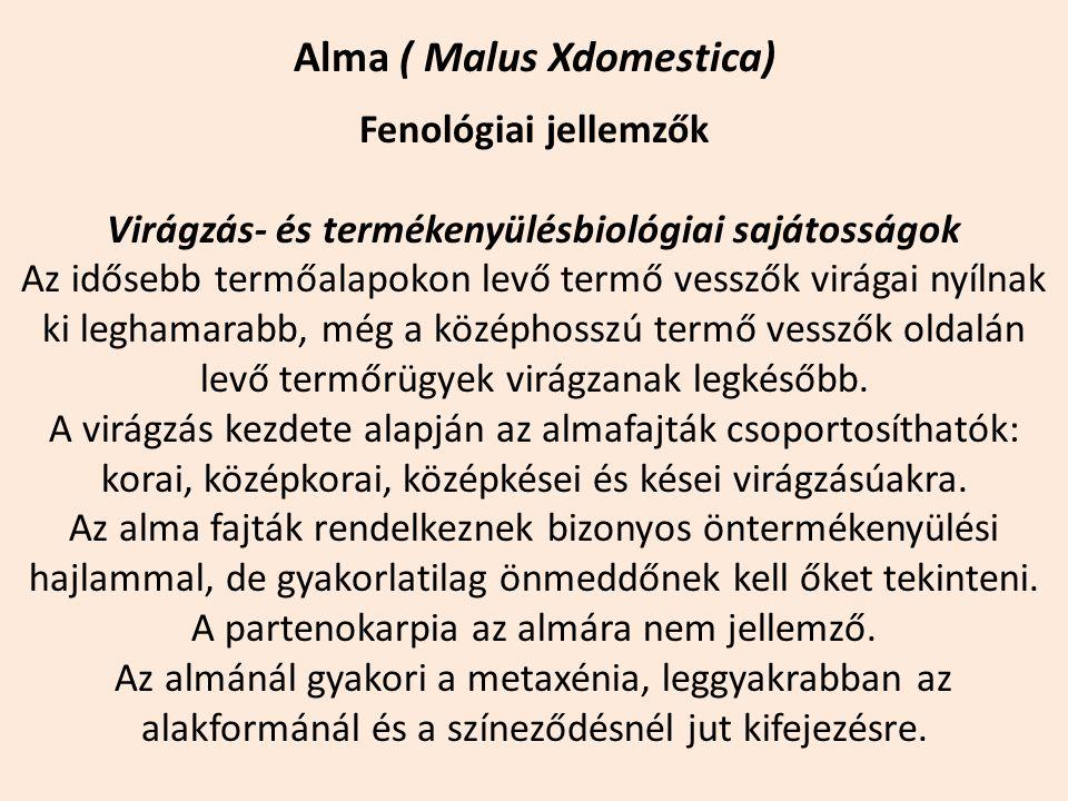 Alma ( Malus Xdomestica) Fenológiai jellemzők Virágzás- és termékenyülésbiológiai sajátosságok Az idősebb termőalapokon levő termő vesszők virágai nyí