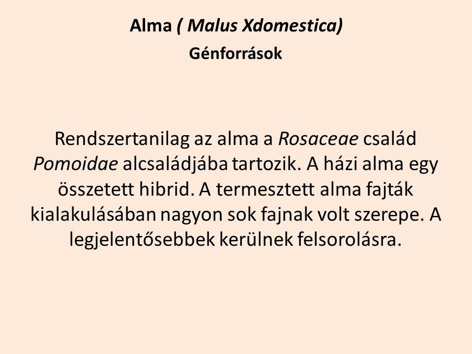 Alma ( Malus Xdomestica) Génforrások Rendszertanilag az alma a Rosaceae család Pomoidae alcsaládjába tartozik. A házi alma egy összetett hibrid. A ter
