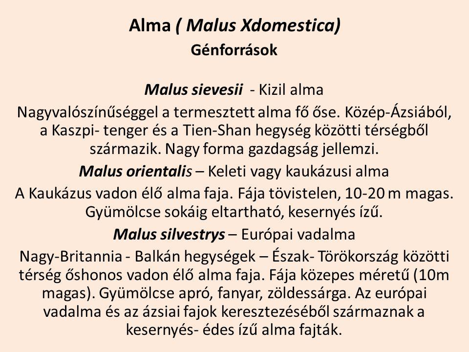 Alma ( Malus Xdomestica) Génforrások Malus sievesii - Kizil alma Nagyvalószínűséggel a termesztett alma fő őse. Közép-Ázsiából, a Kaszpi- tenger és a