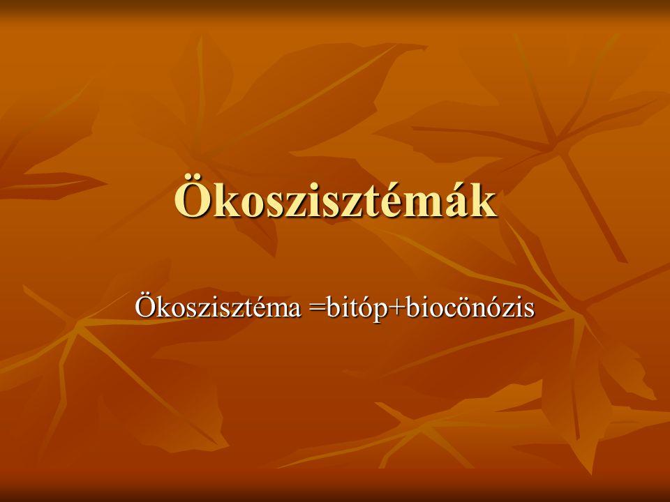 Ökoszisztémák Ökoszisztéma =bitóp+biocönózis