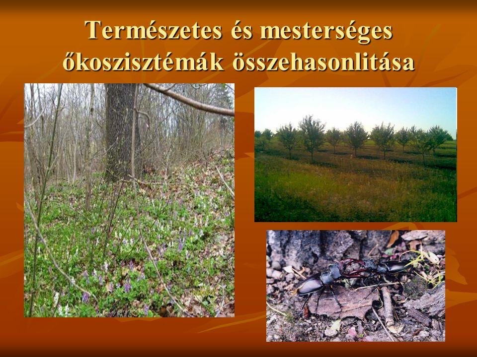 Az ökoszisztémák szerkezete A lombhullató erdők szintekre tagolódnak A lombhullató erdők szintekre tagolódnak 1.