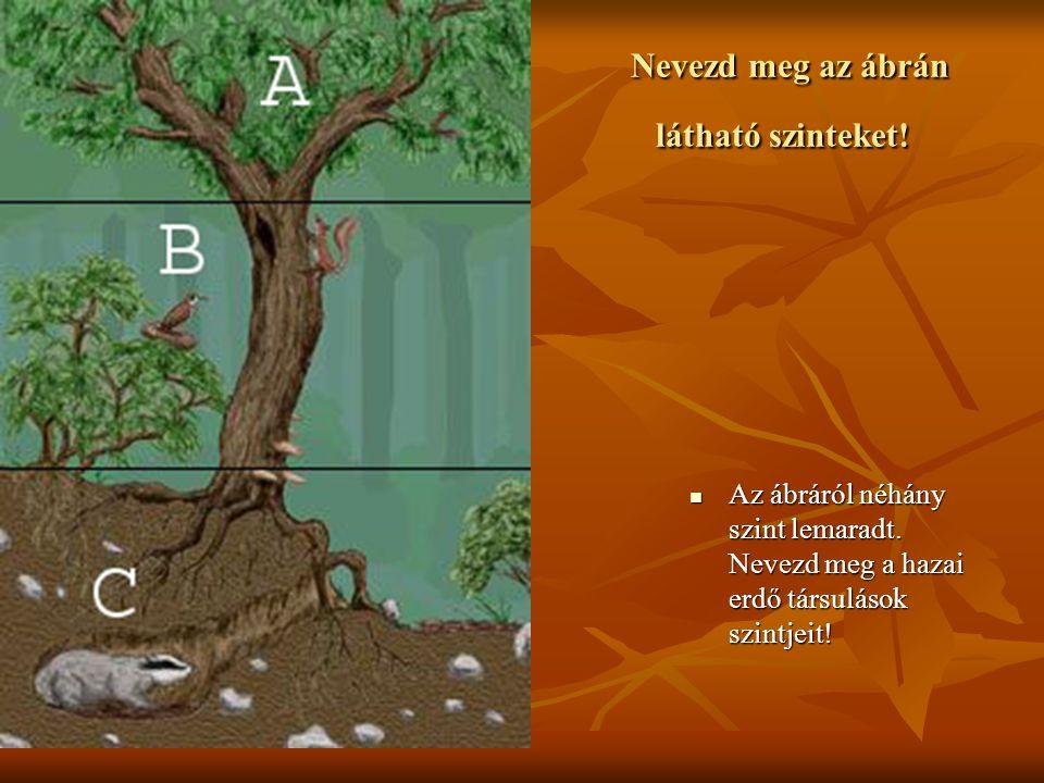 A tó övezetekre tagolódik 1.Nádas övezete: gyékény, sás, nád, gólya, gém, nádiposzáta 2.