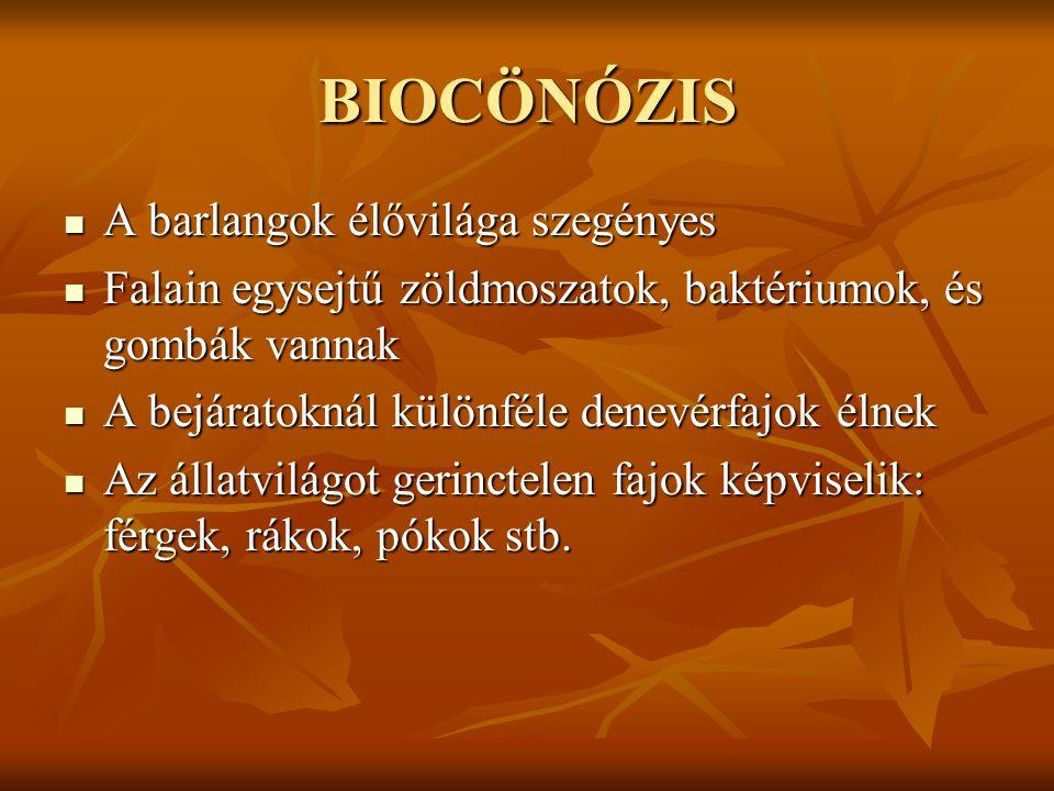 BIOCÖNÓZIS A barlangok élővilága szegényes A barlangok élővilága szegényes Falain egysejtű zöldmoszatok, baktériumok, és gombák vannak Falain egysejtű